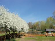 Baumblüte auf dem Biberhof