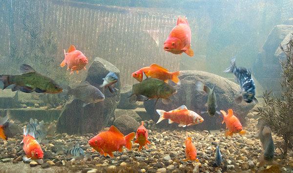 besuchen sie unser aquarium fische auf dem biberhof im spreewald. Black Bedroom Furniture Sets. Home Design Ideas
